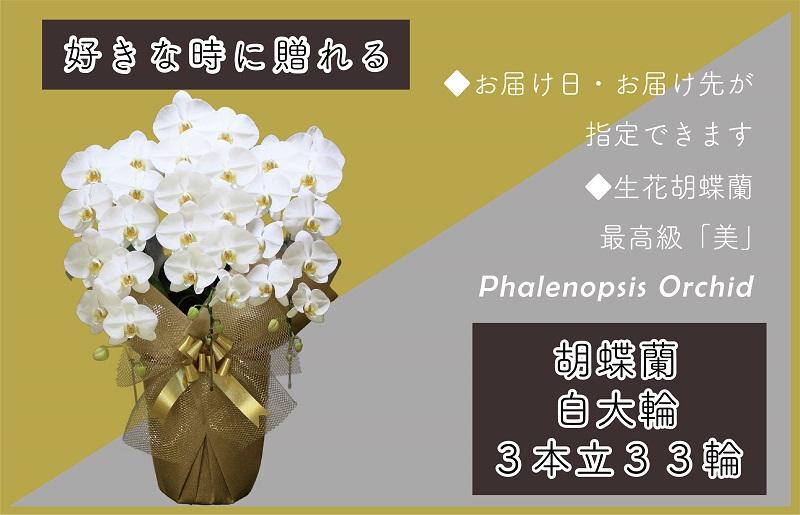 099H380 3本立て白色胡蝶蘭33輪~36輪