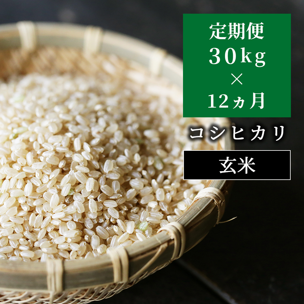 W46定期便 あわくら源流米 コシヒカリ玄米30kg×12回
