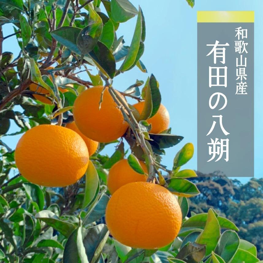 ZE6151_【まごころ手選別】有田のはっさく 10kg S・Mサイズ