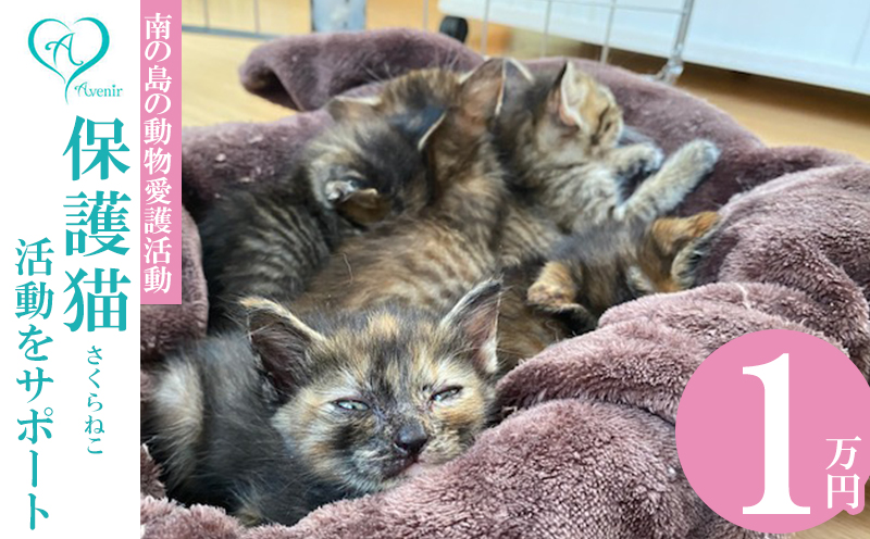 【南の島の動物愛護活動】沖縄アベニールの保護猫(さくらねこ)活動をサポート(1万円)