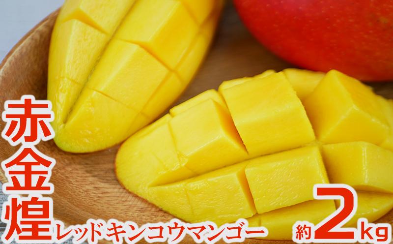 【2021年 発送】赤金煌(レッドキンコウ)マンゴー約2kg