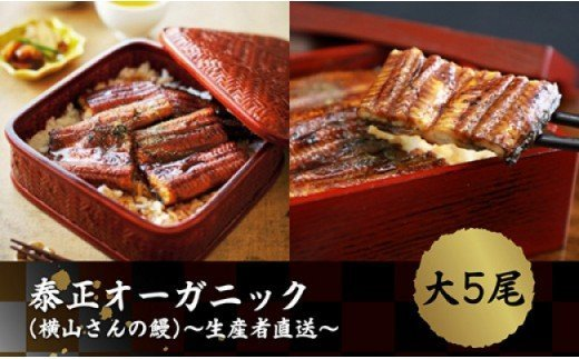 「泰正オーガニック(横山さんの鰻)~生産者直送~ 大5尾」