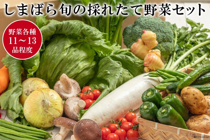 AE176しまばら旬の採れたて野菜セット