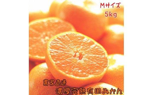 AB6323_農家直送!濃厚完熟有田みかん Mサイズ 5kg