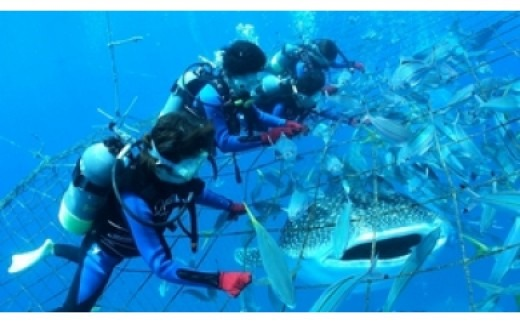 <4名様>圧巻!ジンベエザメ体験ダイビング