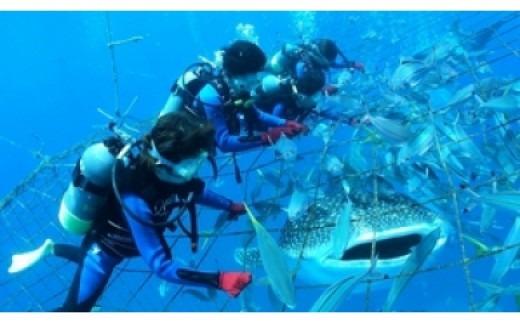 <5名様>圧巻!ジンベエザメ体験ダイビング