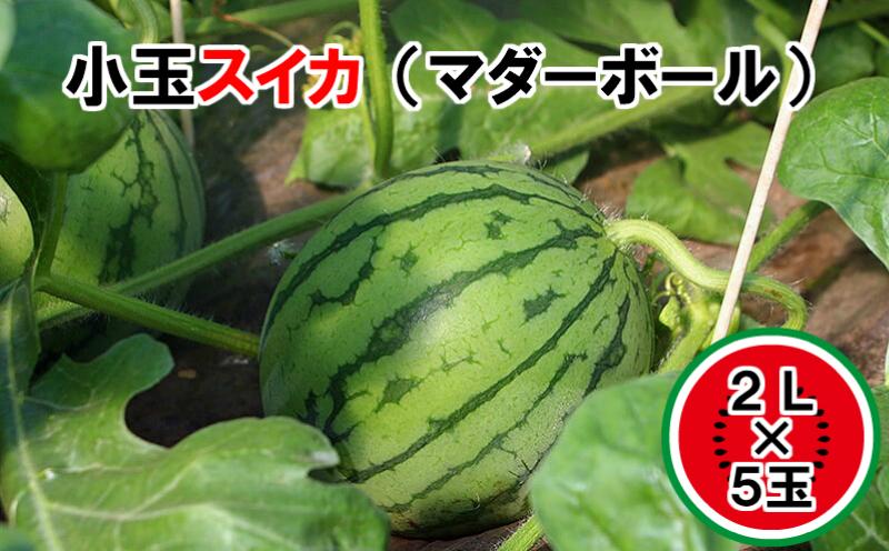 【31718】小玉すいか【マダーボール】(5玉)