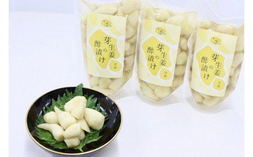 芽生姜の甘酢漬け 3パック