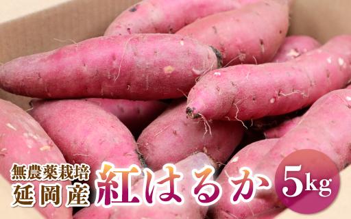 【先行予約】延岡産無農薬栽培さつまいも「紅はるか」5kg(2021年9月発送開始)(A011)