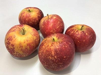 りんご「サンふじ」(降霜被害・訳あり品)5kg JA提供(2021年11月下旬~12月上旬送付) E-1803