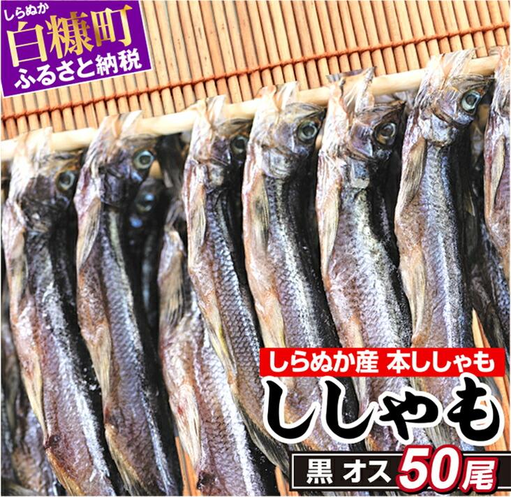 【訳あり】しらぬか産ししゃも【黒オス50尾】(7,500円)