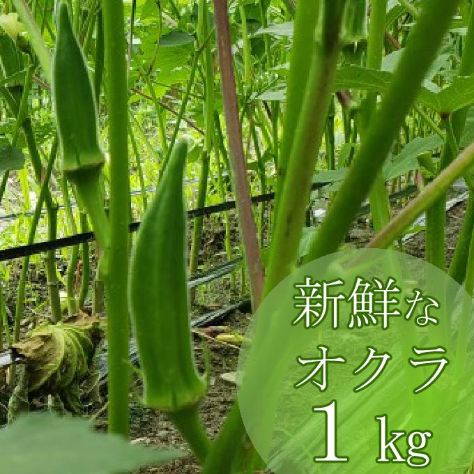 TR001【ご家庭用・訳あり】朝どれ新鮮オクラ1kg