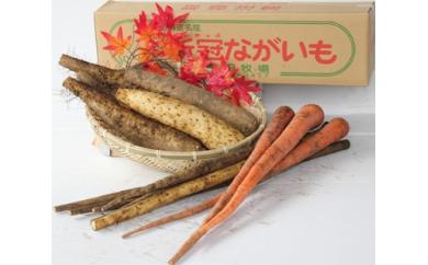 10 新冠産野菜 長もの3点セット(ながいも・ごぼう・にんじん) 10,000円