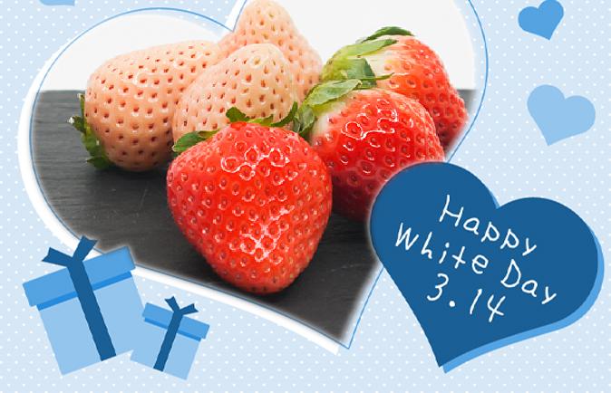 FA005_【ホワイトデー企画:3/13指定配送】佐賀県産 さくら淡雪&さがほのか(220g~2パック)