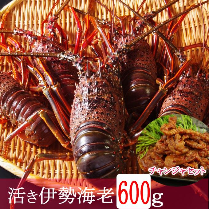 MM012【漁港直送】活き伊勢海老(600g)&天然まぐろのチャンジャセット