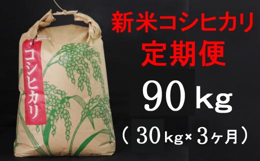 TA037【令和3年産】室戸産新米コシヒカリ30kg【3回定期便】