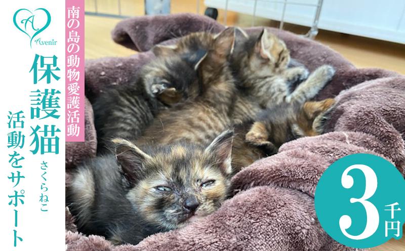 【南の島の動物愛護活動】沖縄アベニールの保護猫(さくらねこ)活動をサポート(3千円)