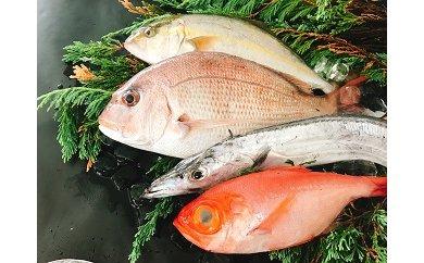 66 太刀魚と旬の魚セット