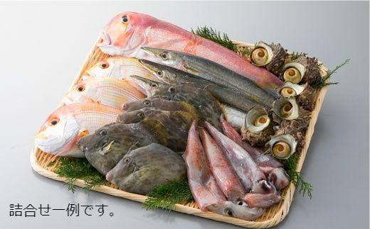 024M3 旬の鮮魚介類6種詰合せ[髙島屋選定品]