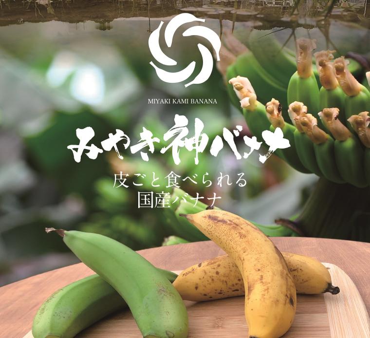CR002_【国産バナナ】みやき神バナナ5本セット(樅箱入り)