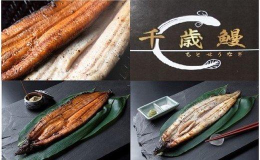 【CF】鹿児島県大隅産 千歳鰻の白焼4尾・蒲焼き4尾