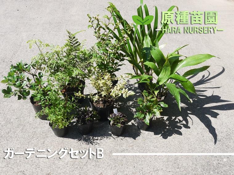 BS075_ガーデニングセットB 花 苗 植物 家庭菜園 花壇 プランター ガーデニング