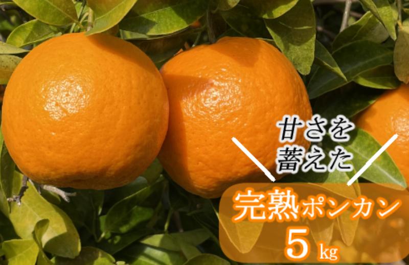 SA003越年完熟室戸ポンカン【5kg】