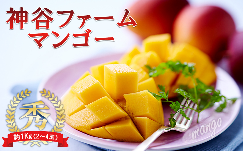 【2022年発送】神谷ファームのマンゴー(秀)約1Kg