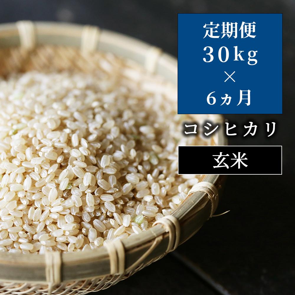 W47定期便 あわくら源流米 コシヒカリ玄米30kg×6回