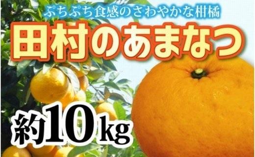 ZA94012_【先行予約】人気の田村のあまなつ 約10kg M~3L