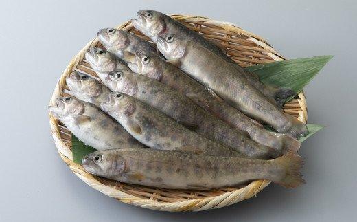 【B-606】井保水産 活岩魚詰合せ 10尾[高島屋選定品]