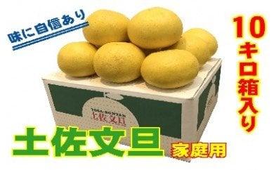 土佐文旦 家庭用10kg(池上果樹園)
