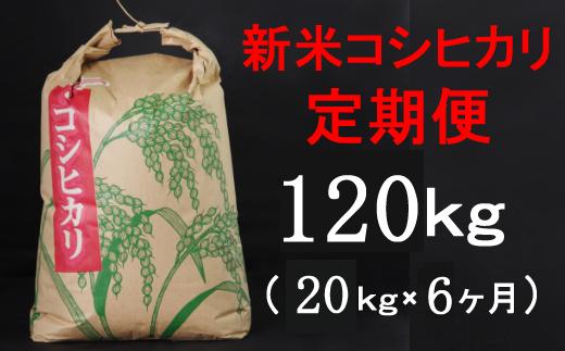 TA036【令和3年産】室戸産新米コシヒカリ20kg【6回定期便】