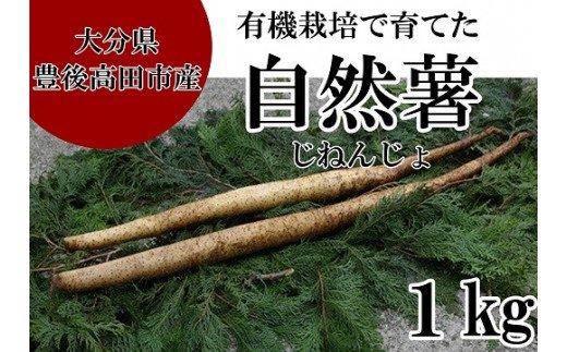 C-25 【先行予約】有機栽培で育てた自然薯(1kg)