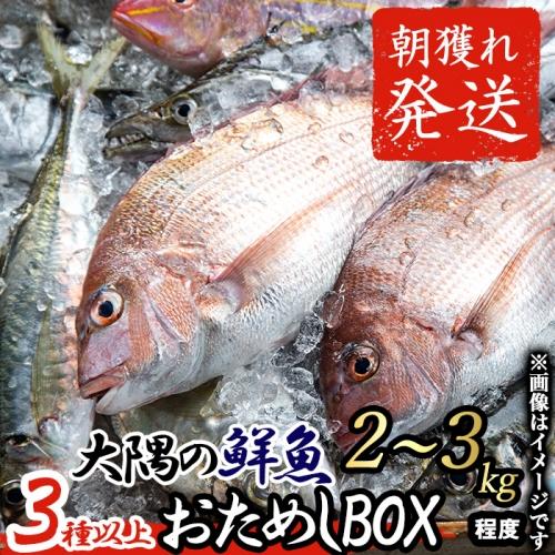 【10828】朝獲れ発送!鮮魚問屋が厳選した『大隅の鮮魚おためしBOX』(約2~3kg程度)【江川商店】