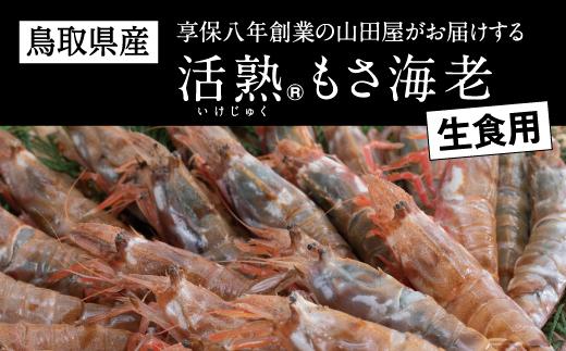 582 鳥取県産 生食用もさ海老(山田屋)