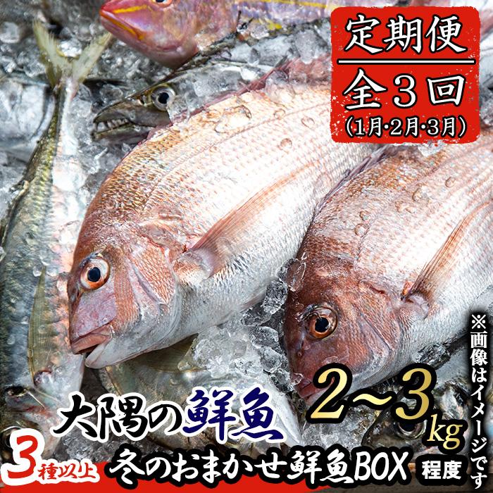【30840】《期間限定!定期便全3回・2022年1月・2月・3月発送》朝獲れ発送!鮮魚問屋が厳選したた『冬のおまかせ鮮魚BOX』【江川商店】