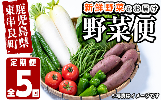 【60599】自慢の農家×老舗青果店 新鮮でおいしい野菜便【年5回配送】【有留青果】