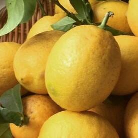 ZW6114_国産有田レモン約5kg ご家庭用