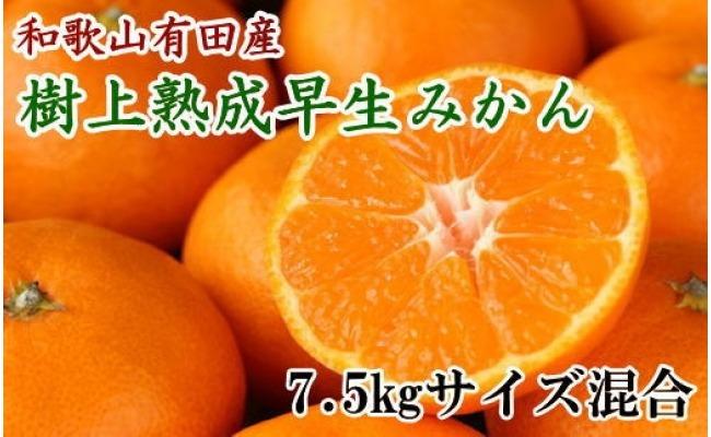 ZD6193_紀州有田産早生みかんの樹上熟成みかん 7.5kg(サイズ混合・秀品)