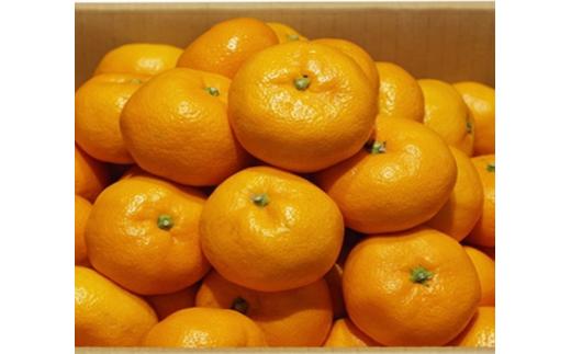 【2月中発送】【JA直送品】昔懐かしい濃厚な味!「温州みかん(みかん)」10kg