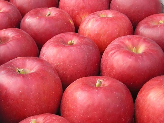 関尾農園 りんご約5キログラム(期間限定)