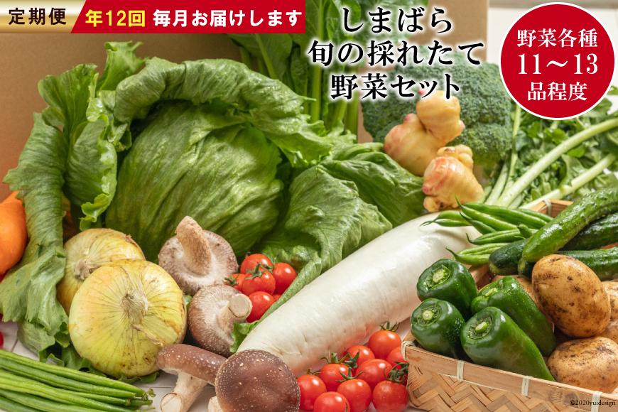 AE177【定期便】しまばら旬の採れたて野菜セット 年12回お届け