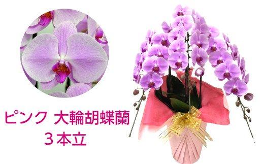 506.ピンクの大輪胡蝶蘭3本立(約39輪)