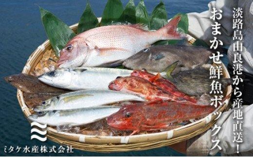 EW02:淡路島由良港から産地直送!おまかせ鮮魚ボックスB