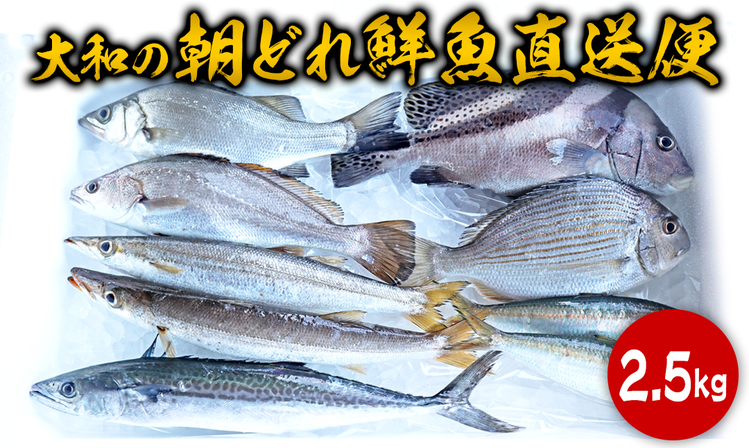 A616 【単月お届け】大和海商の朝どれ鮮魚直送便 2.5kg