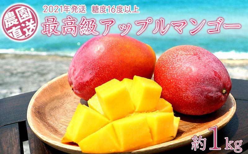 農園から直送する最高級アップルマンゴー!糖度16度以上 約1kg【2021年発送】