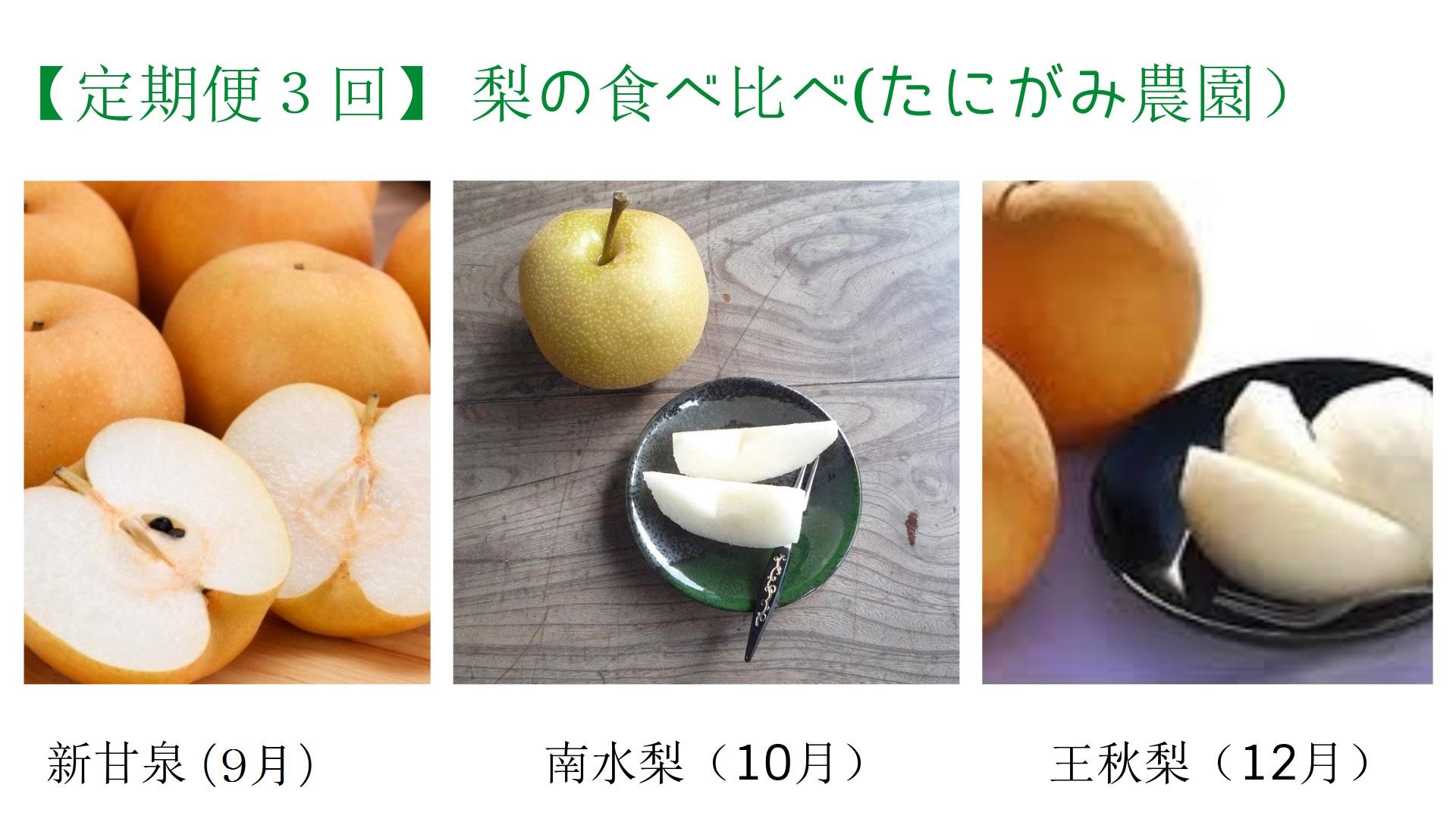 495 【定期便3回】梨の食べ比べ3キロセット(たにがみ農園)