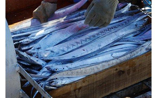 297 紀州 太刀魚2匹(1匹:500~600g)