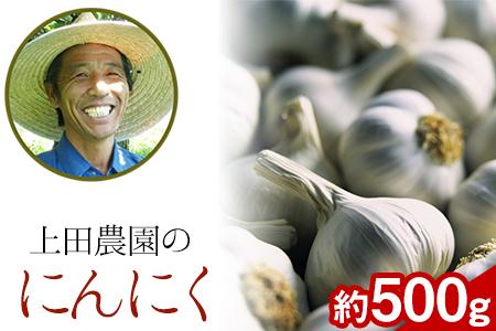 『上田農園』のにんにく約500g 熊本県玉名郡玉東町『上田農園』にんにく《7月上旬-9月中旬頃より順次出荷》
